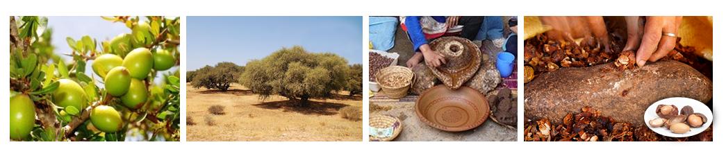 fabrication huile d'argan - nabalsy.com